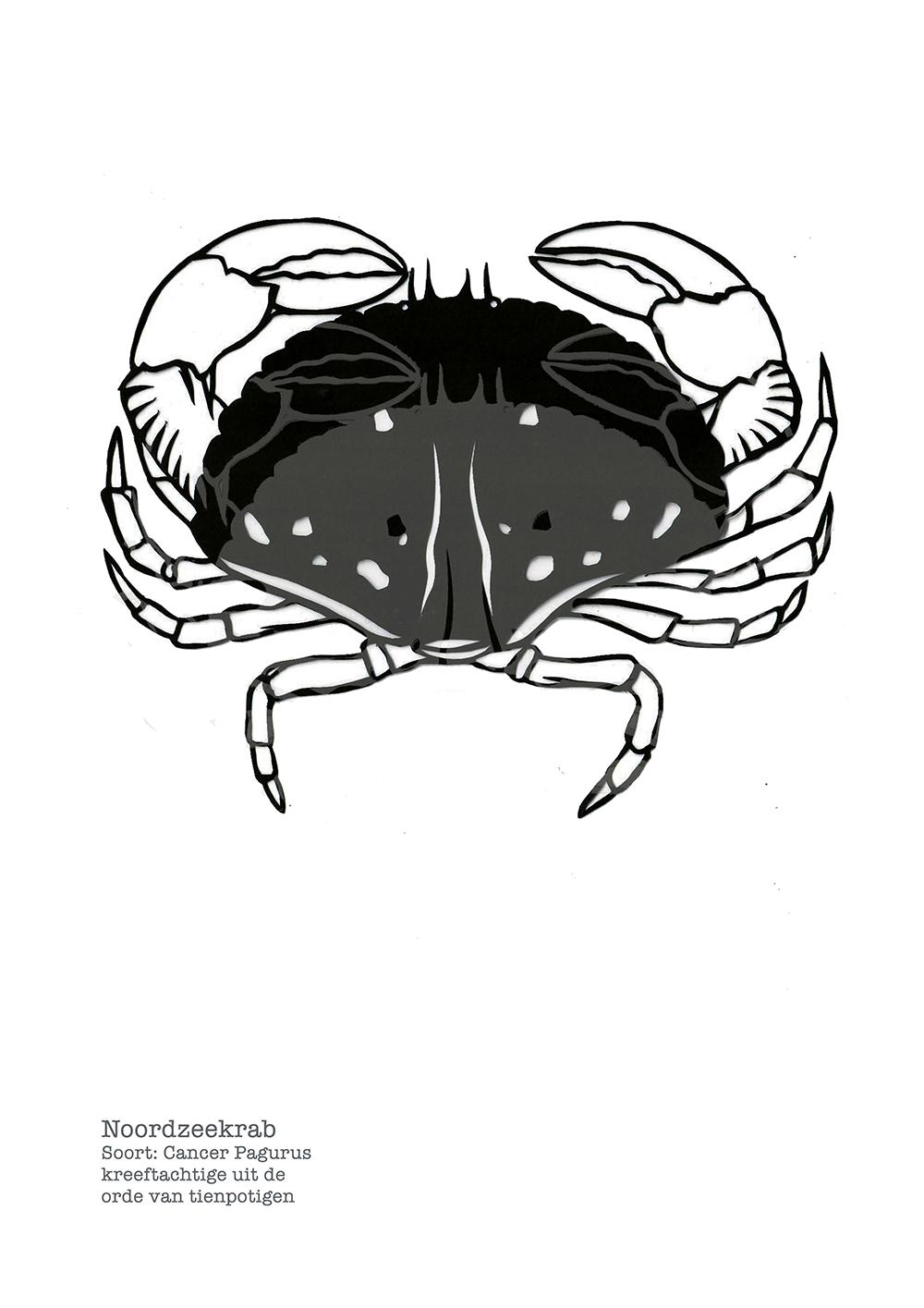 Studiocooliejoelie-karinmol-papiersnijkunst-noordzeekrab-krab